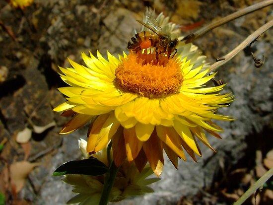 Loaded Bee by PhoenixArt