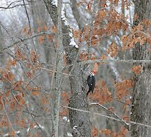 Pileated Eating Insects by amyklein196203
