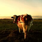 The tale of a curious cow.... by Ruth  Jones