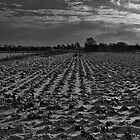 Ploughed Snow by edfcole