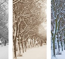 Aspects of Winter by robdavies