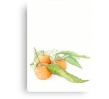 Clementine Oranges Canvas Print