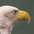 Bald Eagle Profile by janetmarston