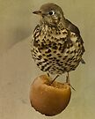 Thrush by inkedsandra