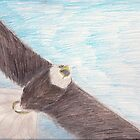 Bald Eagle in Flight by janetmarston