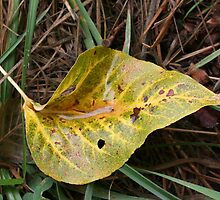 Leaf in Green & Gold by Laurel Talabere