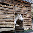 Hand hewn log barn of the 1800's! by Ruth Lambert