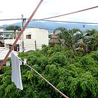 tropical wires by piratesdreaming