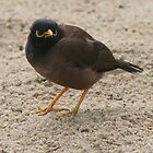 Serenade-in&#x27; A Mynah by ellismorleyphto