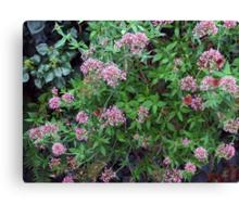 Butterfly Bush Canvas Print