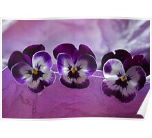 Butterfly Pansy's  Poster