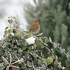 Robin Redbreast by Pamela Jayne Smith