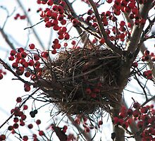 Christmas nest, abandoned by LeeHicksPhotos