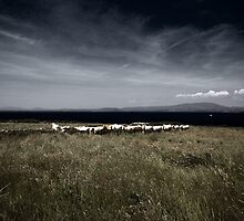 cow landscape by staz