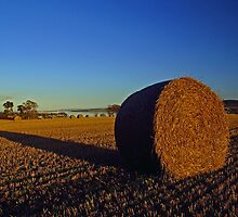 Harvest all wrapped up by John Ellis