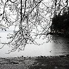 Coastal Rain in ink by TerrillWelch