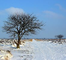 Fochteloerveen in Winter by ienemien