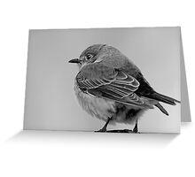 Little Bird in Winter  Greeting Card