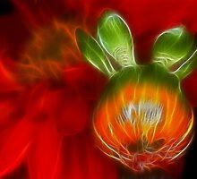 Bud and Bloom - Dark Glow by Doug Greenwald