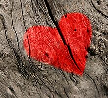 Red heart on the tree bark. by Ligak