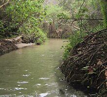 Eli Creek by David80