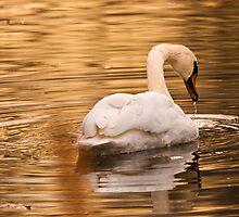 Swan by (Tallow) Dave  Van de Laar