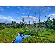 Just Nature - Maine Photographic Print