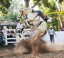 Rough Rider at Kenilworth Queensland by RodeoDownunder