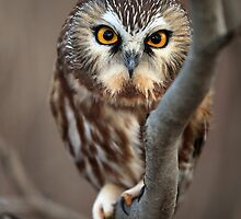 Like I Give A Hoot... by mlorenz