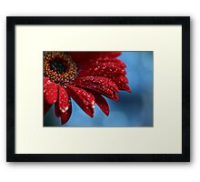 Blue Red Delicious Framed Print