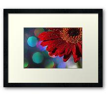 Red Rainbow Gerbera Framed Print