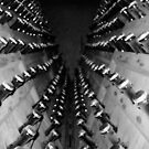 Bottles in the champagne caves of Reims (France) by Christine Oakley