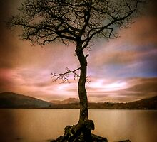 Milarrochy Tree (2) by Karl Williams