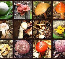 Fungi I Found - Collage by Vanessa Barklay