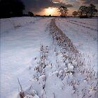 January Sun by Andrew Leighton