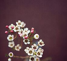 tiny : simple : blooms by kellymacphoto