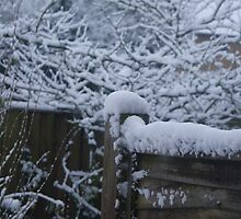 Snow on the fence by Abhijeet Basu