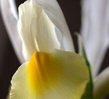 Iris Angel by Joy Watson