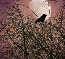 Crow Glow by digitalmidge