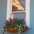 A pretty window by DAdeSimone