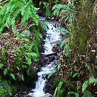 Forest Stream - Glenabo Woods, Cork, Ireland by CFoley
