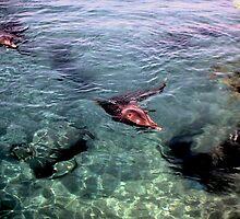 Two Dolphins by Ilunia Felczer