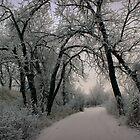Frosty Path by Leanna Lomanski