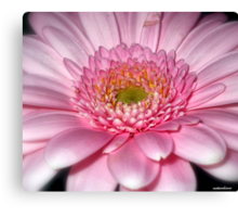 Ice Pink! Canvas Print