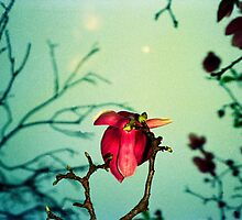 magnolia and moon by Juilee  Pryor