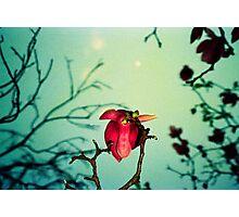 magnolia and moon Photographic Print
