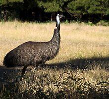 Emu by Pascal Inard