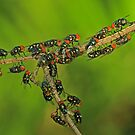 Fly Swarm by Robert Abraham
