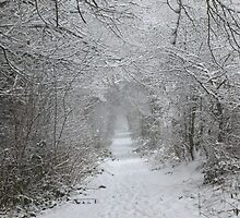 Snow Tunnel  by David Bass