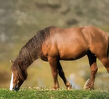 horse by oreundici